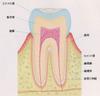 Dentalorgpicture